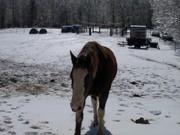 winter 2010-jan 031