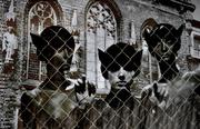 Cat people in prison