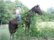 Minty - my Welsh pony