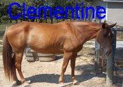 Clementie 8 24 11 (3)