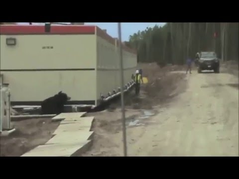 Scary Bear Prank On Construction Worker
