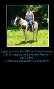 For Sale: 6 year old mare