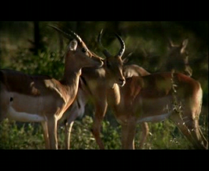 Discovery Channel Atlas SouthAfrica
