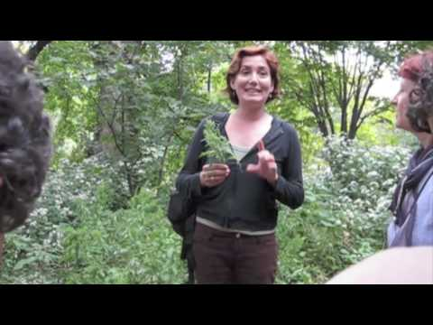 Urban Foraging with Leda Meredith in Prospect Park, Brooklyn, New York City
