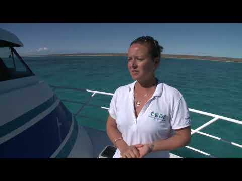 Diving with whale sharks and mantarays in WA