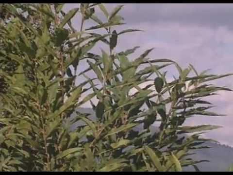 Permaculture - Un veritable developpement durable