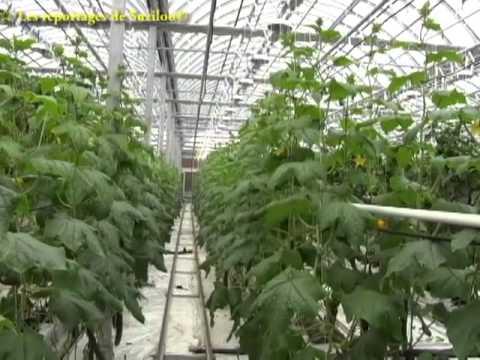 La ferme Lufa à Montréal- Pionnère de l'agriculture