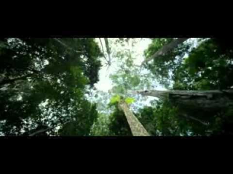 Il était une forêt – Le film