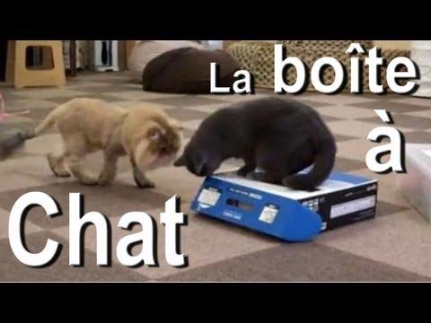 La boîte à chat