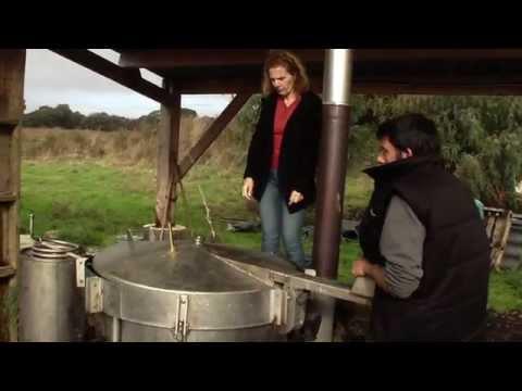 huile essentielle :distillation criste marine