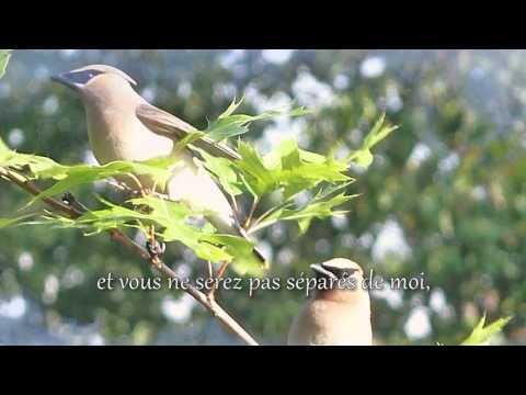 Caroline Allan - L'Érable-Roi - Un arbre noble et plein de sagesse