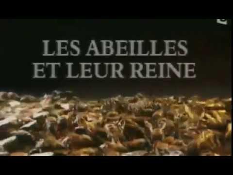 Documentaire   Les abeilles et leur reine