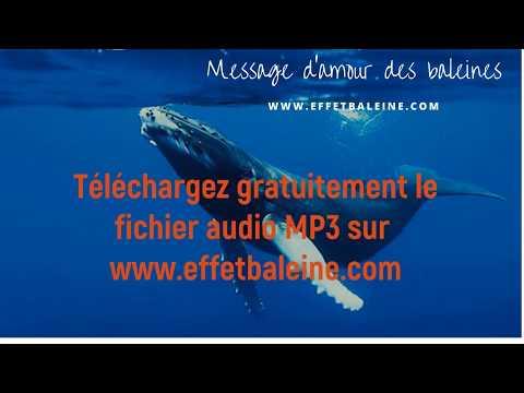 Alimentez vos centres d'énergie par la vibration des baleines!