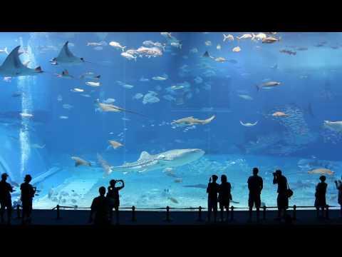 L'aquarium géant de Kuroshio - Magnifique !