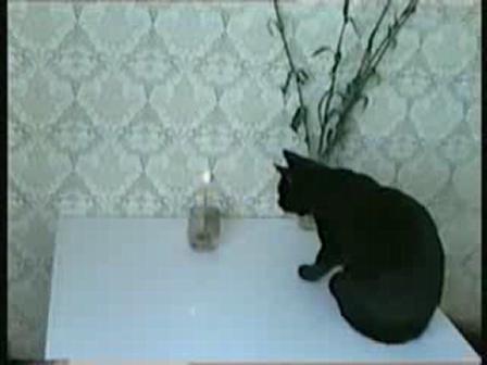 Animal Evolution; cat unafraid of fire