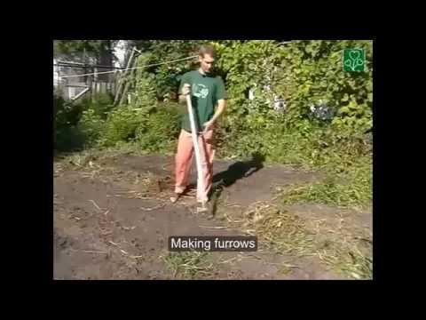 Russian flat-cutter (ploskorez Fokina) in use!