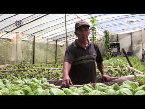 Sustainable Farming Systems: Organic Agriculture in Benguet, Philippines