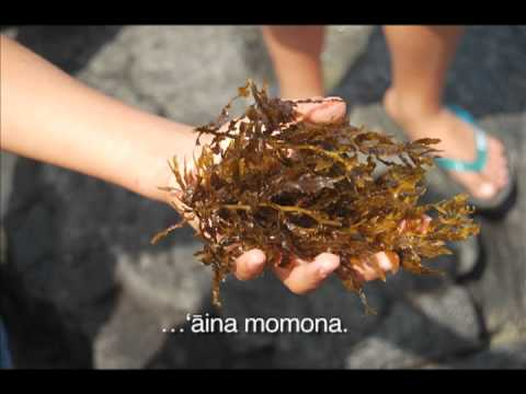 Hawai'i Community Stewardship Network