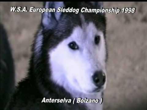 W.S.A. EUROPEAN SLEDDOG CHAMPIONSHIP 2011  L'AQUILA ITALY