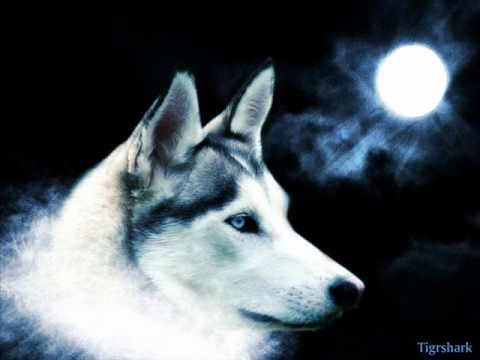 My Wolf Howls(Extended Edition)