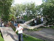 fallen tree on 42nd