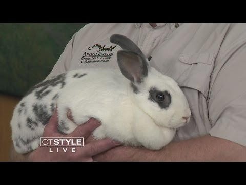 CT STYLE: Good Pet - Bad Pet: Exotic Pet Ownership