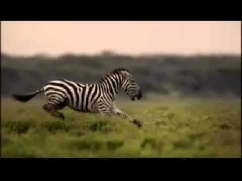 Great Migrations on National Geographic Channel