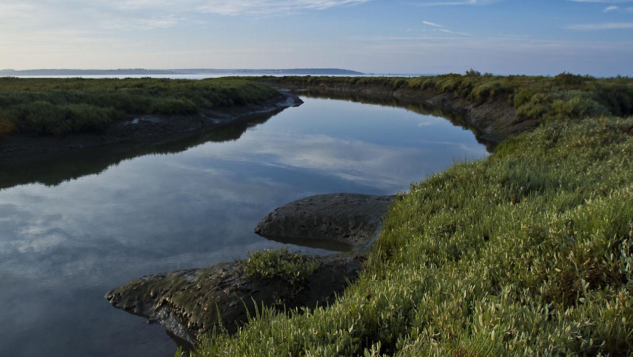 Entre o céu e as marés - Aves do estuário do Sado