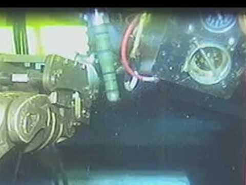 メキシコ湾深海の「食鉄」生物