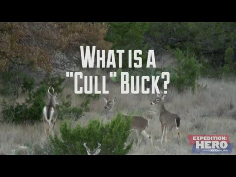 "What is a ""Cull"" Buck?"