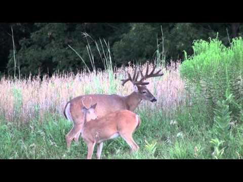 Iowa monster 17 point buck part 2, city deer Des moines