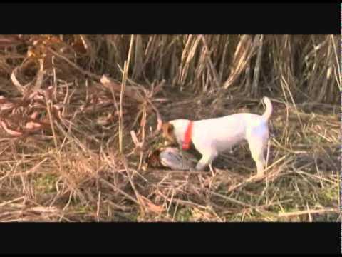 Hidden Lakes Hunting Resort TV - huckleberry