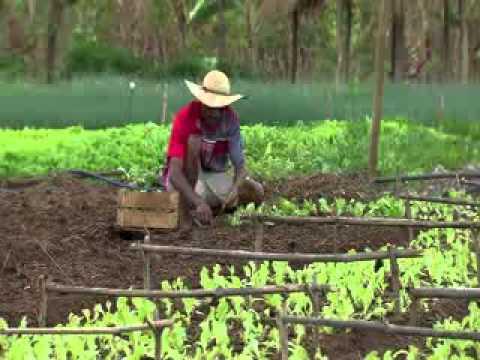 Caminhos da Reportagem mostra a rotina de quem trabalha com agricultura familiar