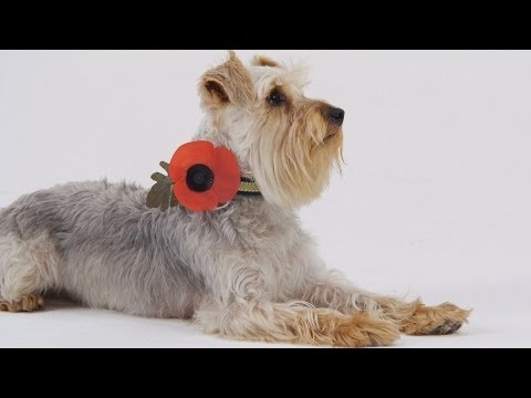 How Do You Wear Your Poppy?