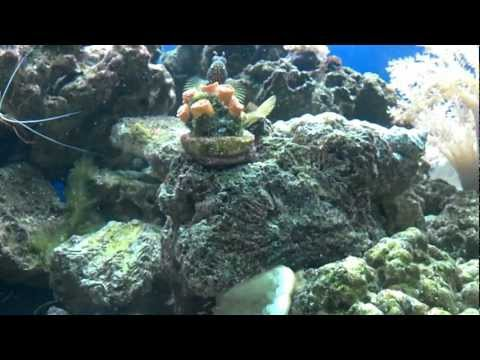(HD) First Reef Tank 110g  8 month update