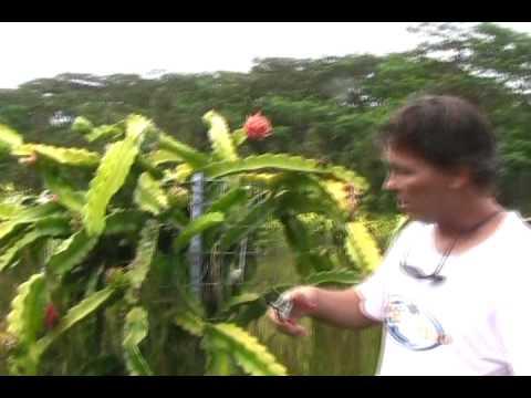 Gregg Talks Dragon Fruit