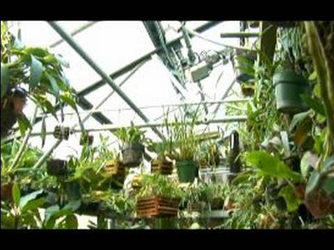 How to Grow Orchids: Growing Orchids Indoors : Growing Orchids in Greenhouses