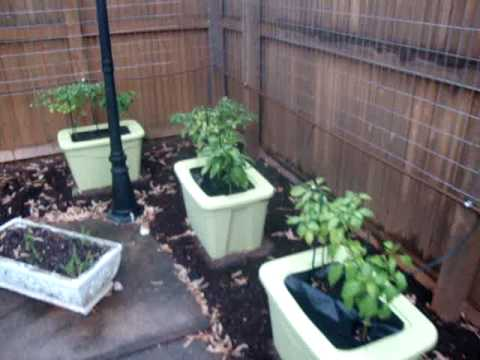 UG- Outdoor Fence Gardening #2