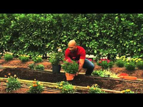How to Plant a Perennial Garden