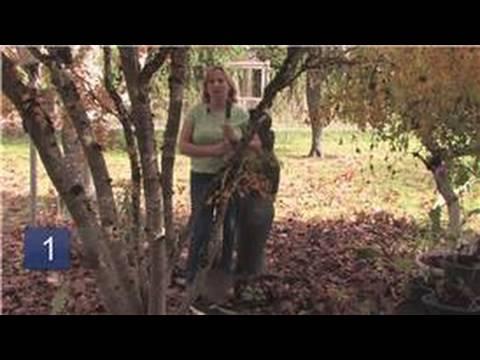 Gardening Tips : How to Transplant a Bearded Iris