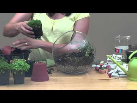 Miniature Garden Under Glass