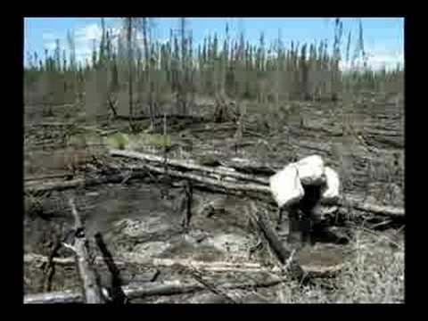Tree Planting in Manitoba - 2008