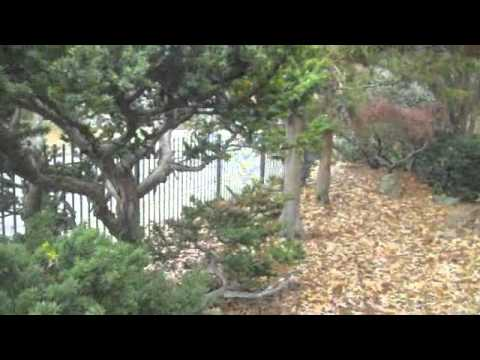 Mort's Winter Gardens
