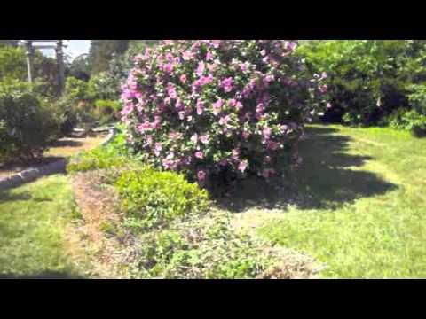Extrodinary Old Plants