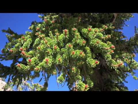 Merveilleuse Nature/des arbres extraordinaires
