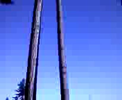 Tree Droppin