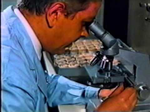 Explicación sobre la transmisión del Mal de Chagas