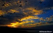 Nuvens e Aves