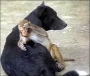 amizade entre diferentes