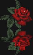 ESPECIAL ROSA